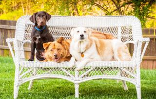 Няня для собаки