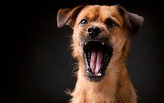 собака знает команды, но не всегда их выполняет