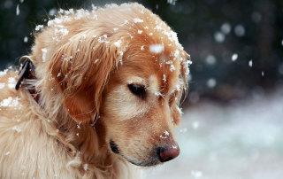 Как уберечь собак от отравления
