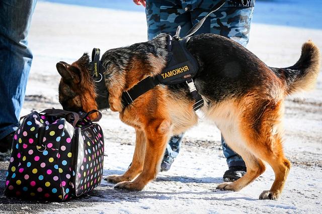 Подготовка кинологов для работы с собаками по поиску наркотических веществ