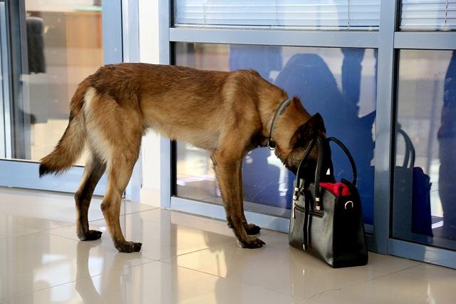 Подготовка кинологов для работы с собаками по поиску взрывчатых веществ