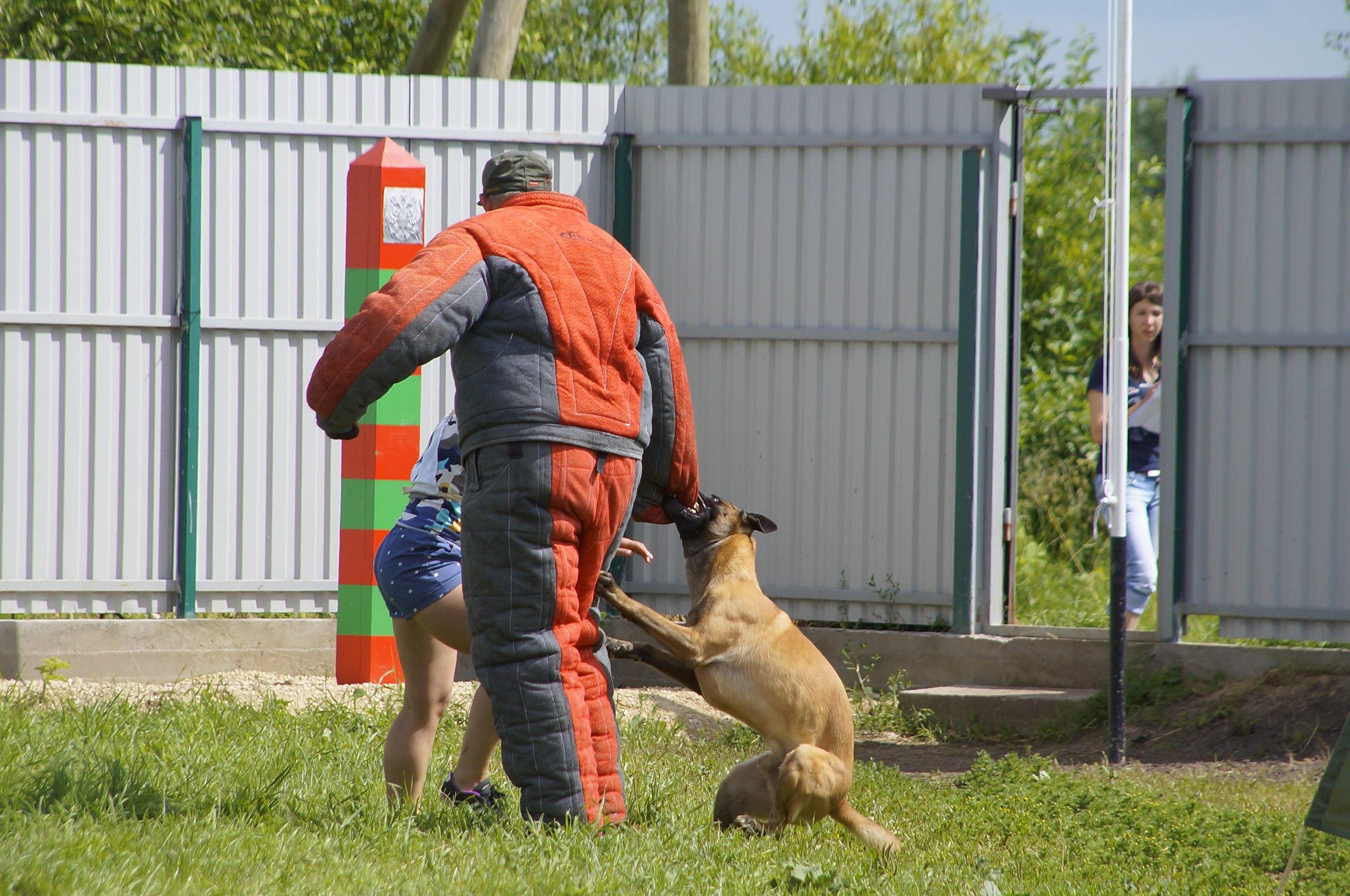 Соревнования по биатлону с собаками — 2017
