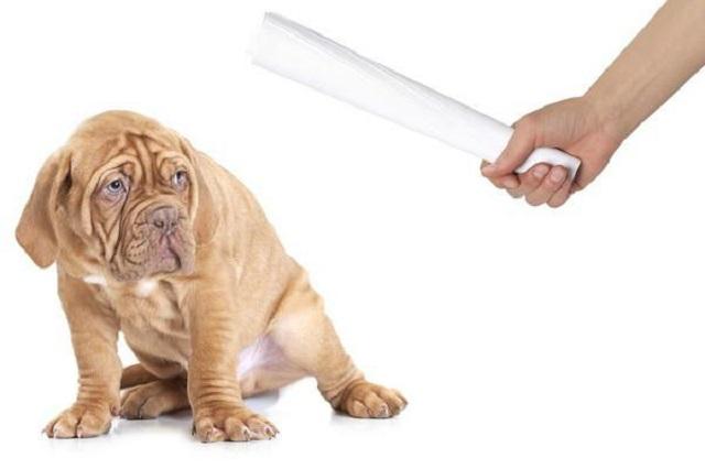 можно ли бить собаку?
