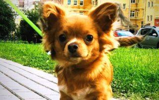 Дрессировка собак в Кировском районе