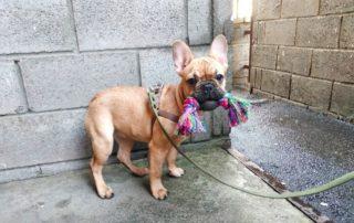 Дрессировка собак во Фрунзенском районе