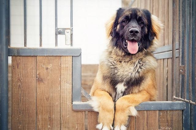 Охрана дома собакой
