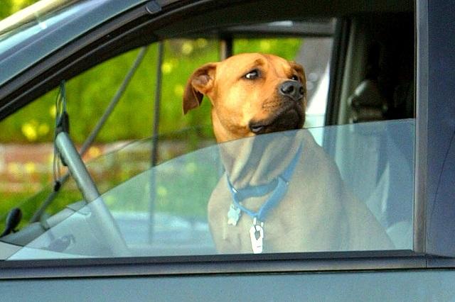 Охрана собакой квартиры и автомобиля