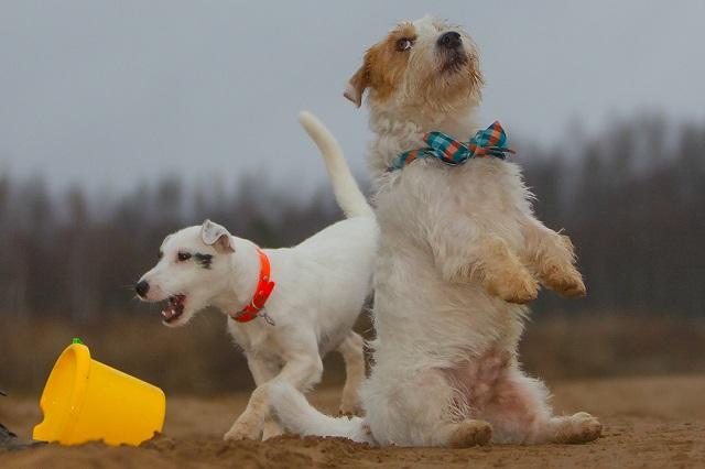 Скидки на дрессировку собак
