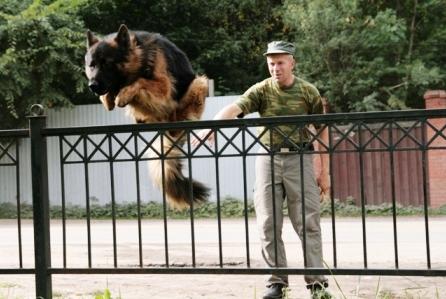 Дрессировка собак в Пушкинском районе