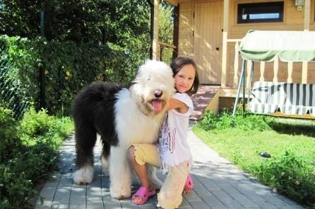 Дрессировка собак в Купчино
