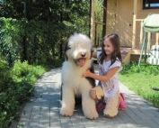 Собака-компаньон (ВН)