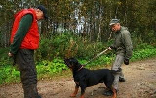 Дрессировка собак в Невском районе