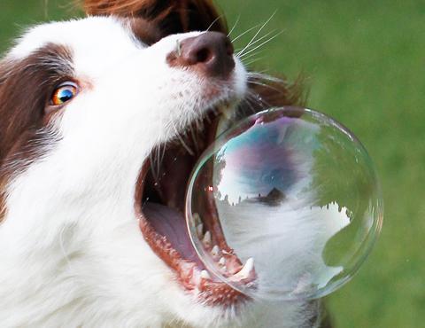 Общий курс послушания собак