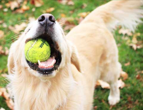 Абонемент на дрессировку собаки