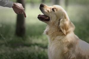 Дрессировка собак в Санкт-Петербурге