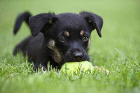 Угасание условных рефлексов, навыки у собак
