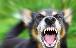 Коррекция поведения собак