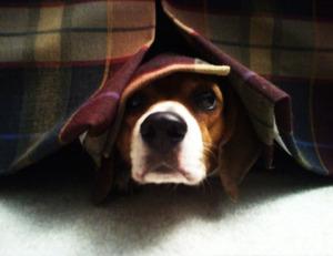 Заразные болезни собак: железница