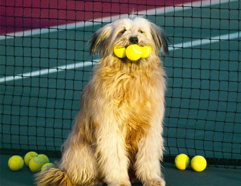 Дрессировка собак по индивидуальному заказу