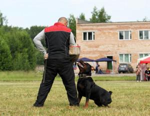 Дрессировка собак в СПб