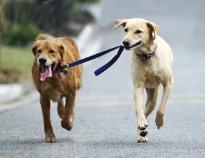 Испытания по курсу собака-компаньон