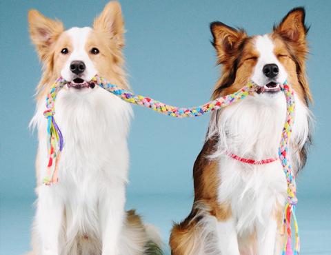 Цирковая дрессировка собак