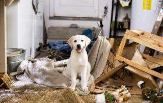Коррекция проблемного поведения собаки