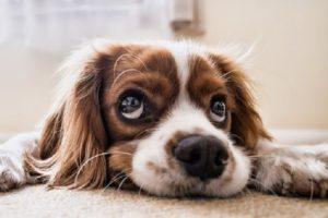 Индивидуальный подход при дрессировке собак