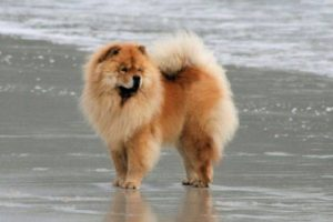 собака убегает