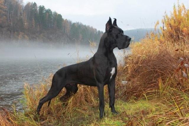 Функциональная характеристика анализаторов собак