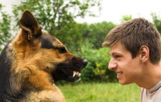 Различие характера и темперамента у хозяина и у его собаки