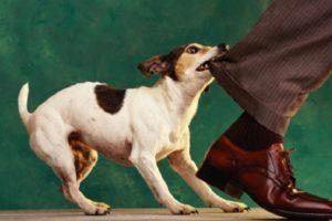 Агрессия, связанная с иерархическим поведением