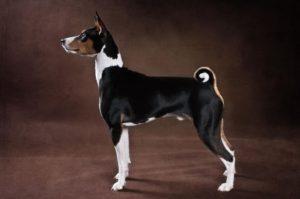 Рецепторы и анализаторы собак, их особенности и функциональные возможности