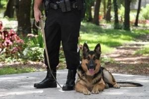 Собака- охранник дома