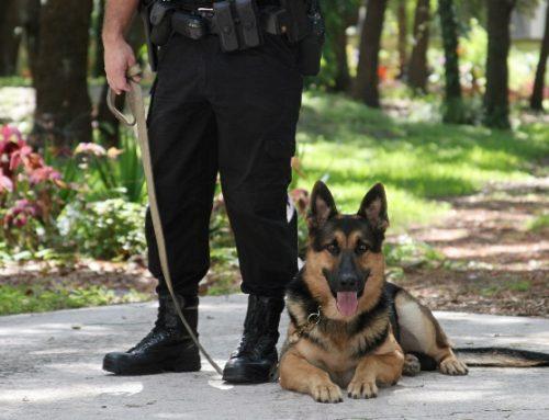 Собака— охранник дома