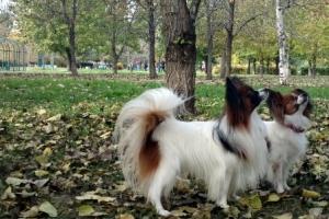 Способы которые не дадут собаке скучать
