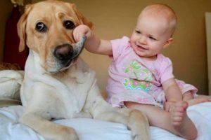 щенок или взрослая собака