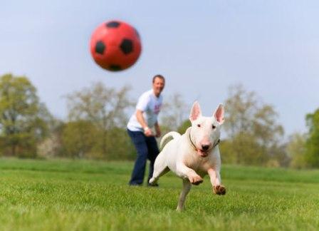 О применяемых методах дрессировки собак