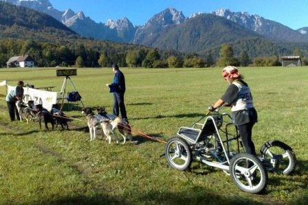 Dog-karting