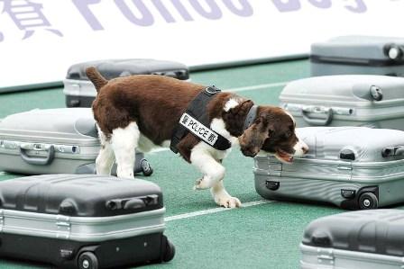 Приучение собаки к выборке вещи
