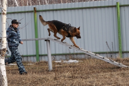 Троеборье с собаками