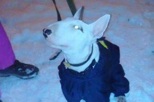 Какие методы дрессировки подойдут для вашей собаки
