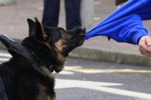 защита хозяина