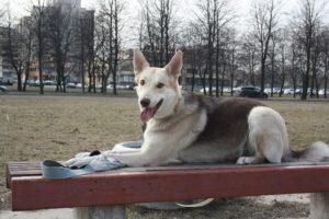 Управляемая городская собака (УГС)