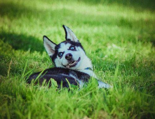 Фото и видеосъемка собак