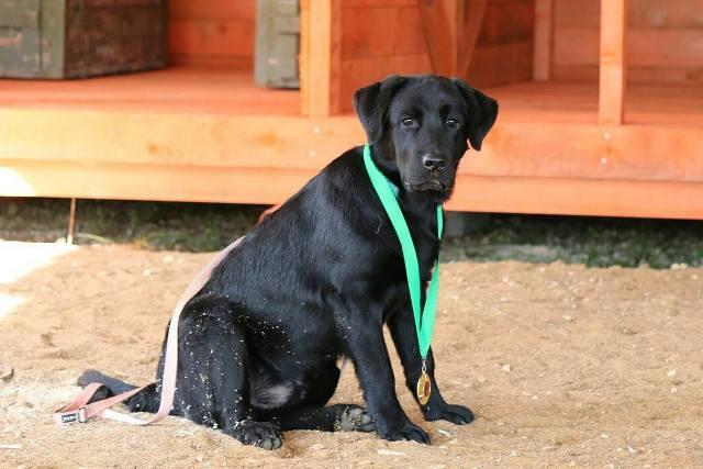 Нужны ли базовые знания владельцам собак