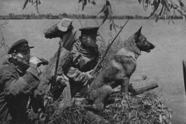 Правила проведения соревнований по троеборью с собаками