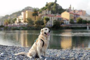 городская собака