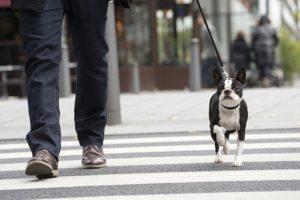 управляемая собака