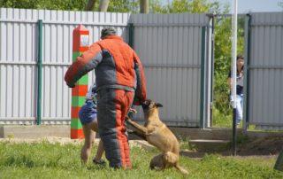 Соревнования по биатлону с собаками